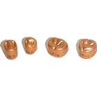Temgold #1 Upper Right 1st Permanent Bicuspid Gold Anodized Aluminum Temporary Crowns, Box of 5