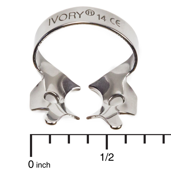 Ivory Clamps 14 Winged Partially Erupted Or Irregularly