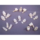 Master-Dent #11 Upper Right Central Polycarbonate Crown Form, Box of 5 Crown