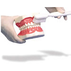 JS Dental Demonstration Toothbrush Model - Larger than life replica that enables you to give